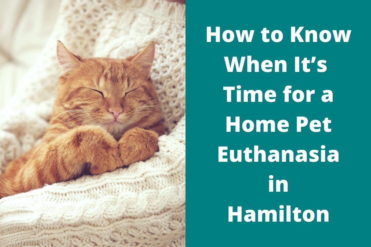 How to Know When It's Time for a Home Pet Euthanasia in Hamilton